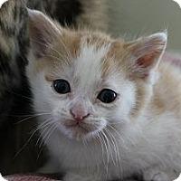 Adopt A Pet :: Ollie - Grand Rapids, MI