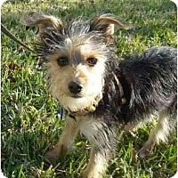 Adopt A Pet :: Skyler - West Palm Beach, FL