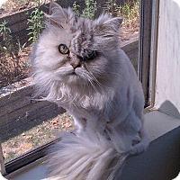 Adopt A Pet :: Annie - Beverly Hills, CA