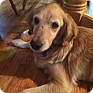 Adopt A Pet :: Brandy