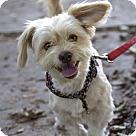 Adopt A Pet :: Hazel