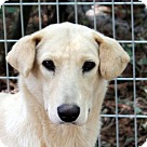 Adopt A Pet :: Bitsy