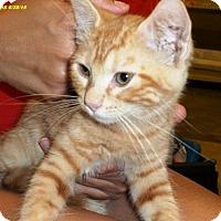 Adopt A Pet :: Janis - Irving, TX