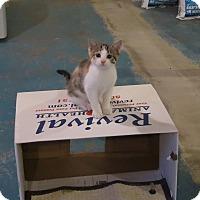 Adopt A Pet :: Isabella - Geneseo, IL