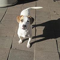 Adopt A Pet :: Tonny - San Diego, CA