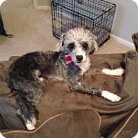 Adopt A Pet :: Charlee - Spartanburg, SC