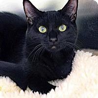 Adopt A Pet :: Midnight - Paris, ME