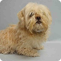 Adopt A Pet :: Lucious - Bernardston, MA