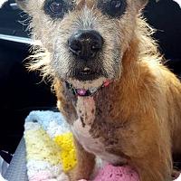 Adopt A Pet :: Mary - Elyria, OH