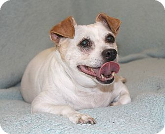 Chihuahua/Pug Mix Dog for adoption in Temecula, California - Greg - I have a video