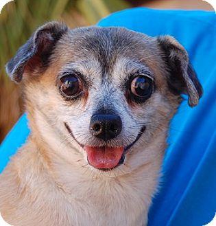 Chihuahua/Pug Mix Dog for adoption in Las Vegas, Nevada - Lolita