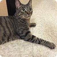 Adopt A Pet :: SPECKLES - Brea, CA