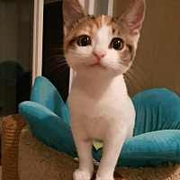 Adopt A Pet :: Delta Dawn - Los Angeles, CA
