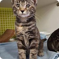 Adopt A Pet :: Ezzie - Youngsville, NC