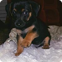 Adopt A Pet :: Newton - Monroe, NC