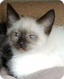 liquid benadryl for cats