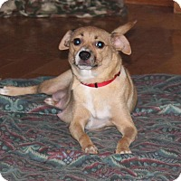 Adopt A Pet :: Hazel - Sugar Grove, IL
