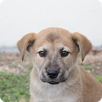 Adopt A Pet :: Derek - San Antonio, TX