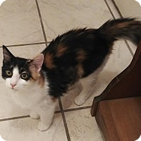 Adopt A Pet :: Bella-courtesy listing cathie - Homestead, FL