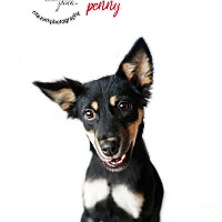 Adopt A Pet :: PENNY - Sherman Oaks, CA