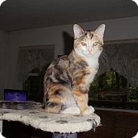Adopt A Pet :: Annabelle (Anna) - Evans, WV