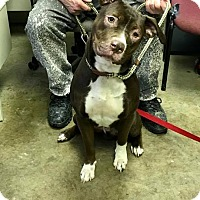 Adopt A Pet :: WHISKEY - Cadiz, OH