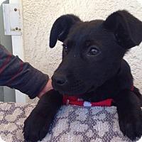 Adopt A Pet :: Arabela - BONITA, CA