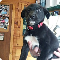 Adopt A Pet :: Bella - Northumberland, ON