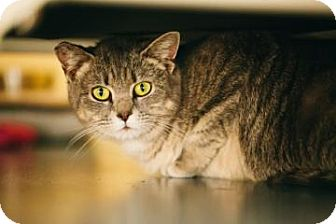 Domestic Shorthair Cat for adoption in Centre Hall, Pennsylvania - Samantha