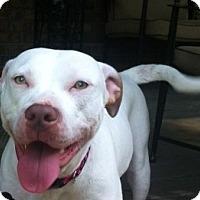 Adopt A Pet :: Sarah - Snellville, GA
