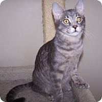 Adopt A Pet :: K-Gloria4-George - Colorado Springs, CO