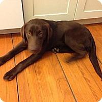 Adopt A Pet :: Roxie - Saskatoon, SK