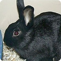 Adopt A Pet :: Denali - Green Bay, WI