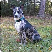 Adopt A Pet :: Cammie - Mocksville, NC