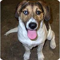 Adopt A Pet :: Pinnix - Hagerstown, MD