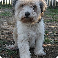 Adopt A Pet :: Deegan - Orange Park, FL