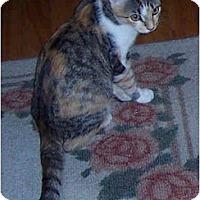 Adopt A Pet :: Gypsy - Summerville, SC