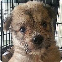 Adopt A Pet :: Mildred#6F - Orlando, FL