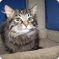Adopt A Pet :: K-Chippewa1-Mitchell - Colorado Springs, CO