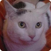 Adopt A Pet :: Shakira - Mesa, AZ
