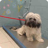 Adopt A Pet :: Ian - Simi Valley, CA