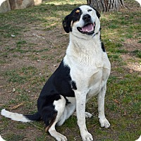 Adopt A Pet :: Molly - Mountain Center, CA