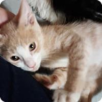 Adopt A Pet :: Bunker - McDonough, GA