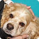 Adopt A Pet :: Araxie
