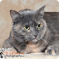 Adopt A Pet :: Sugar - Broadway, NJ