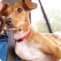 Adopt A Pet :: Kimmi - Vancouver, BC
