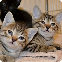 Adopt A Pet :: Jade and Garnet - Dallas, TX