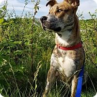 Adopt A Pet :: Dingo-Prison Graduate - Elyria, OH