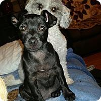 Adopt A Pet :: George - Bellingham, WA