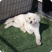 Adopt A Pet :: RAIDER - San Pablo, CA